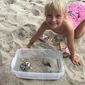Found her Pet Hermit Crabs