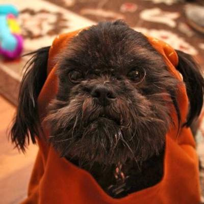 Our Pet Ewok