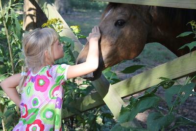 A New Horse Friend
