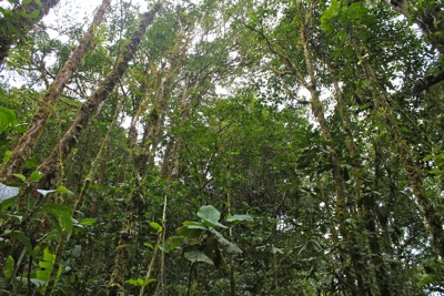 Trees in the Cloud Forest