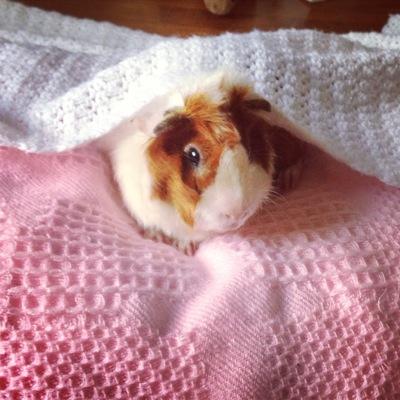 Piglet Observes the World